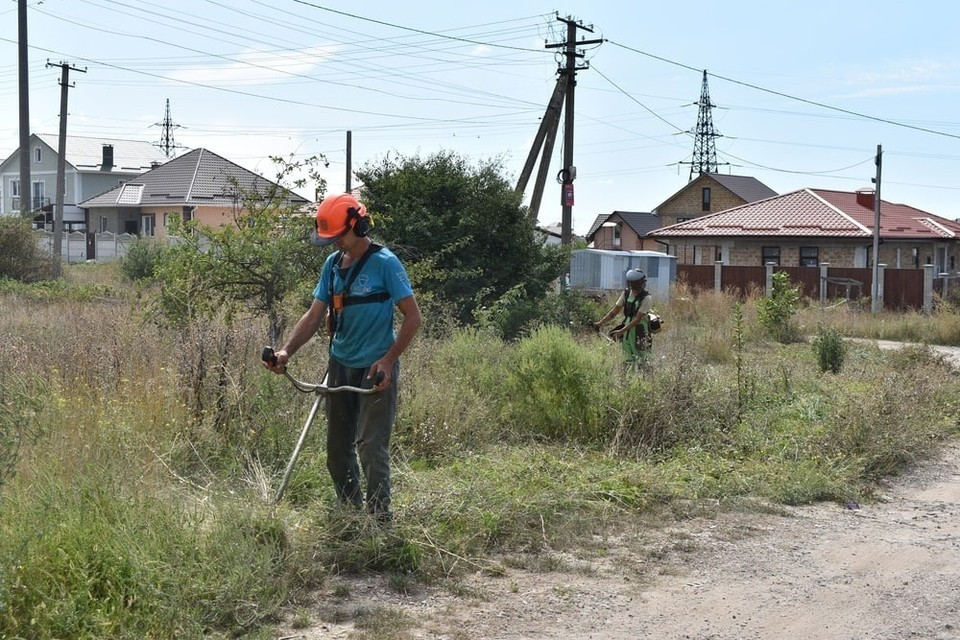 В Симферополе продолжают бороться с опасным растением. Фото: пресс-служба администрации крымской столицы