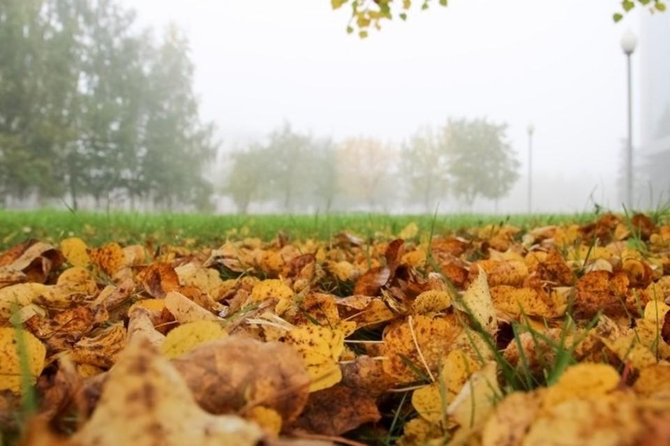 В Смоленской области температура воздуха 6 сентября опустится до -2ºС.