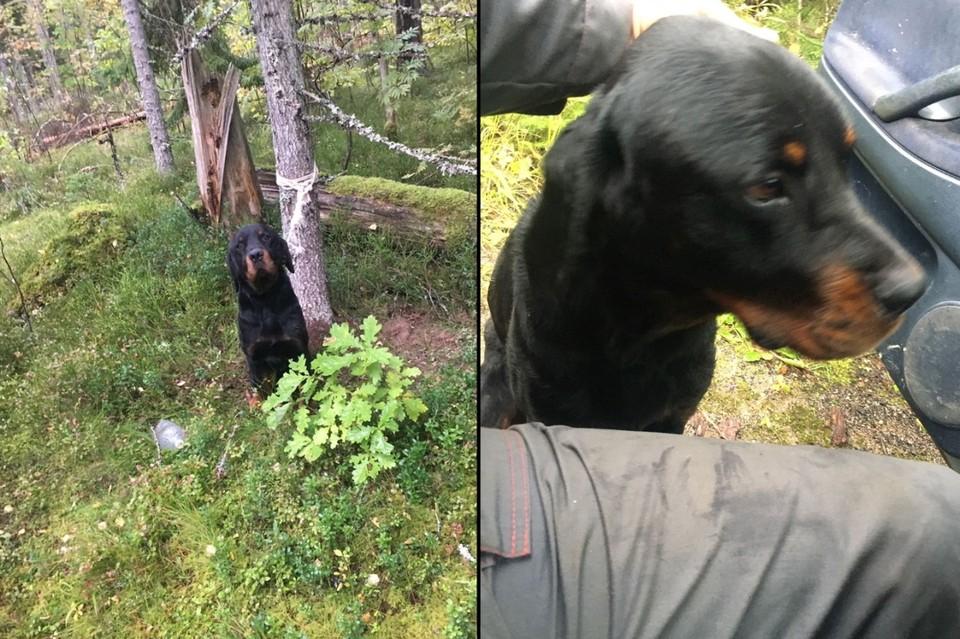 """В Усть-Луге нашли собаку, привязанную к дереву и брошенную неизвестным. Фото: предоставлено """"КП"""""""