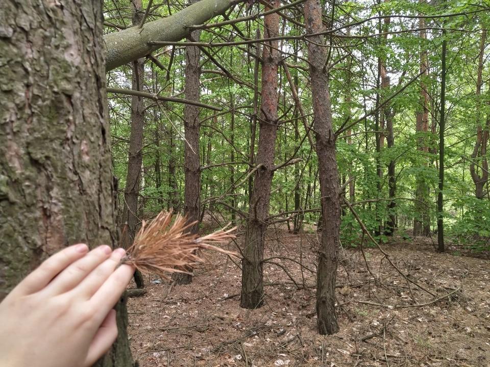 За сутки в Орловской области потерялись семь грибников